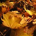 Fall by Bamalam  Photography