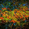 Fall Begins by Wayne Maris
