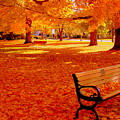 Fall Bench  Newburyport Ma by Suzanne DeGeorge