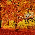 Fall by Bert Mailer