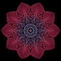 Fall Blossom Zxk-10-43 by Doug Morgan