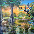 Fall Bounty- Big Cypress Swamp  by Daniel Butler