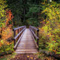 Fall Bridge by Cat Connor