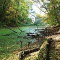 Fall By A River by Juraj Simek