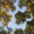 Fall Canopy In Virginia by Teresa Mucha