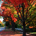 Fall Color 2010 No 5 by Joanne Coyle