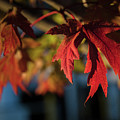 Fall Color 5528 18 by M K Miller