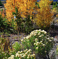 Fall Color Comes To Dillon Reservoir by Ray Mathis