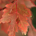 Fall Color In Softness by Deborah Benoit