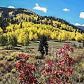 Fall Color In The Colorado Foothills by NaturesPix