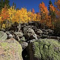 Fall Color In The Rocky Mountains by Ronald Lutz