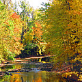 Fall Color On Creek  5597 by Jack Schultz