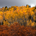 Fall Color On The Manti La Sal Mountains by Dan Norris