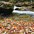 Fall Color Rushing Stream by Thomas R Fletcher