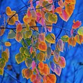 Fall Color by Tim Nicholson