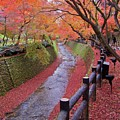 Fall Colors Along Bending River In Kyoto by Jake Jung