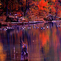 Fall Colors And Geese by James Harris