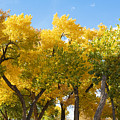 Fall Colors Arizona by Waterdancer