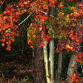 Fall Colors by Artie Rawls