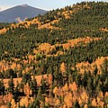 Fall Colors At Rocky Mountain National Park by Dan Sproul