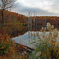 Fall Colors At The Reservoir by Rich Despins