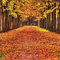 Fall Colors Avenue by Roberto Pagani