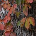 Fall Colors by David Murray