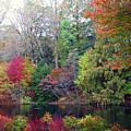 Fall Colors by Deborah England