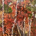 Fall Colors by Geeta Biswas