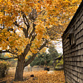 Fall Colors by Herman Robert