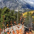 Fall Colors In Rocky Mountain National Park by Nicole Belvill