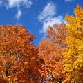 Fall Colors In Spokane by Ben Upham III