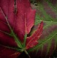 Fall Colors by John Unwin