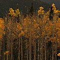 Fall Colors by Kris McGehee