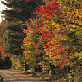 Fall Colors Line A New England Road by Heather Perry