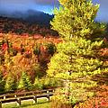Fall Colors On Grandfather Mountain Ap by Dan Carmichael