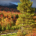 Fall Colors On Grandfather Mountain by Dan Carmichael