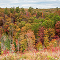 Fall Colors On Hillside by Cris Ritchie