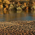 Fall Colors On The Rio Grande 1 by Tim McCarthy