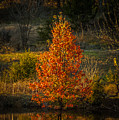 Fall Colors by Sunshine Nelson