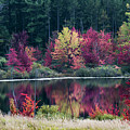 Fall Colors - Thompson Lake 7581 by Steve Somerville