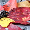 Fall Colors by Wendy Gertz