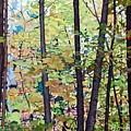 Fall Colour Medley by Allan OMarra