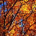 Fall Colours by David Matthews