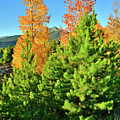 Fall Comes To Dillon Colorado by Ray Mathis