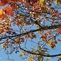 Fall by Doris Giardini