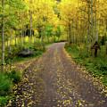 Fall Dream by Scott Mahon