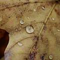 Fall Droplets by Deborah Benoit