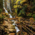 Fall Falling by Dave Bosse