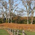 Fall Fence by Lauri Novak